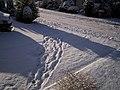 Footprints in the snow - geograph.org.uk - 2190175.jpg