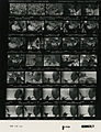 Ford B1096 NLGRF photo contact sheet (1976-08-16)(Gerald Ford Library).jpg