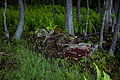 Forest-floor-spring-ferns - West Virginia - ForestWander.jpg