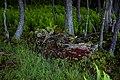 Forest-floor-spring-ferns - West Virginia - ForestWander.jpg