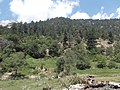 Forest - panoramio (66).jpg