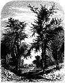 Forest Hymn pg 45.jpg