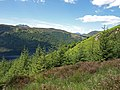 Forest clearing above Loch Chon - geograph.org.uk - 1351161.jpg