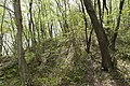 Forest in Mt.Nabeashi 03.jpg