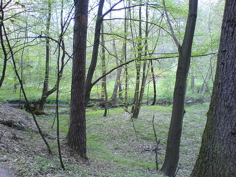 File:Forest nature reserve Grady nad Moszczenica7, Poland, 6 May 2006.JPG