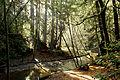 Forest of nisene marks (8256195347).jpg