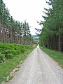 Forest road, Dalby Snout, Langdale Forest - geograph.org.uk - 220091.jpg