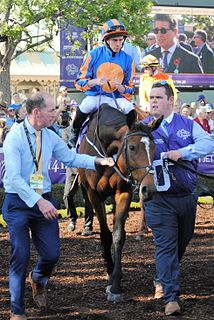 Found (horse) Irish Thoroughbred racehorse