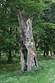 Frauenwald-Naturdenkmal-1-Asio.JPG
