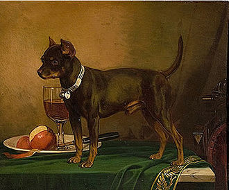 Terrier - A pet terrier in 1875 (English Toy Terrier type), painting by Frederick August Wenderoth