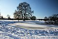 Frozen pond near Ickworth House - geograph.org.uk - 1628848.jpg