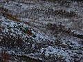Frozen tundra (244362316).jpg
