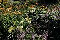 Göteborgs botaniska trädgård-IMG 5562.jpg
