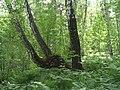 G. Miass, Chelyabinskaya oblast', Russia - panoramio (43).jpg