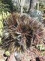 Gardenology.org-IMG 2447 hunt0903.jpg