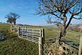 Gate, tree and fence - geograph.org.uk - 1191976.jpg