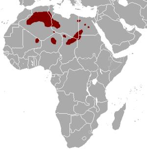 Rhim gazelle - Image: Gazella leptoceros