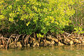 Gfp-florida-biscayne-national-park-mangroves.jpg