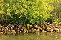 Gfp-florida-biscayne-national-park-mangroves.jpg