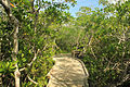 Gfp-florida-keys-key-largo-boardwalk.jpg