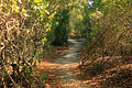 Gfp-florida-keys-long-key-state-park-forest-walkway.jpg