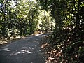 Ghat Road @ Sholayar Reserved Forest - panoramio.jpg