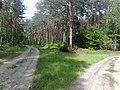 Gmina Pysznica, Poland - panoramio (4).jpg