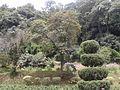 Godavari Botnaical Garden.jpg