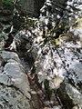 Gole di Alli 7 - Foto Teresa Petrone.jpg