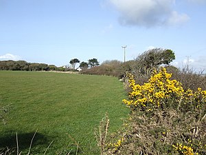 Meaver - Image: Gorse in bloom at Meaver geograph.org.uk 367259