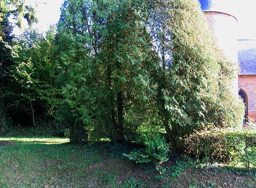 Grandrieux (Aisne, France) -  La haie et le chemin creux au sud-est de l'église fortifiée.   Camera location  49°43′58.58″N, 4°10′58.5″E  View this and other nearby images on: OpenStreetMap - Google Earth    49.732940;    4.182916