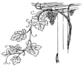 Grapevine (PSF).png