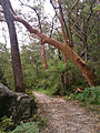 Great North Walk, Berowra Trail (13813295883).jpg