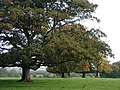 Grimston Park - geograph.org.uk - 573393.jpg