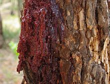 Gum from Red Gum crystaline