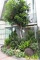 HK 觀塘 Kwun Tong 勵業街 Lai Yip Street 108 Wai Yip Nov 2017 IX1 創紀之城7期 Millennium City 絲寶國際大廈 C-bons Intl Centre plants.jpg