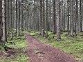 Halen III Nature Reserve Blekingeleden trail.jpg