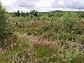 Hallmuir Plantation - geograph.org.uk - 486221.jpg