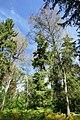 Hambacher Forst bei Morschenich DE 2018-09-09 H.jpg