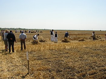 Harvest in Skorenovac.jpg