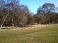Heaton Park - geograph.org.uk - 1748198.jpg