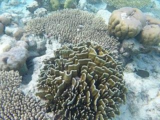 Coral reefs of Tuvalu List of coral reefs in Tuvalu