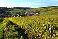 Herbstlicher Spaziergang durch die Becksteiner Weingärten. 13.jpg
