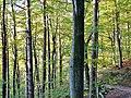 Herbstlicher Wald - panoramio (7).jpg