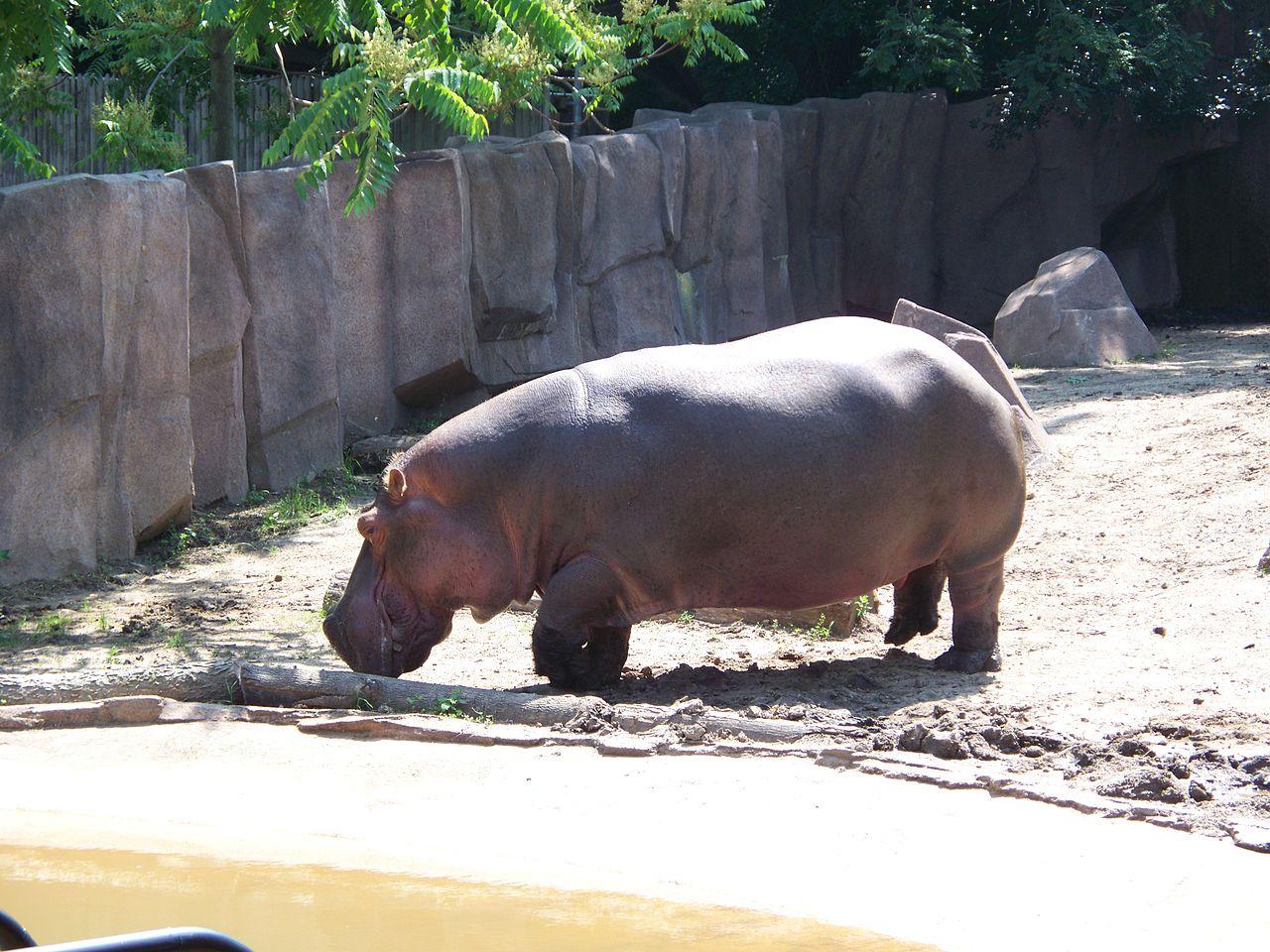 K Lite Hippo File File:Hippo Milwaukee C...