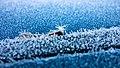 Hoar frost on a blue car 5.jpg