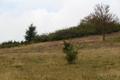 Hoher Vogelsberg Gackerstein Oberweide Breungeshain 344580 Prunus Ericaceae.png