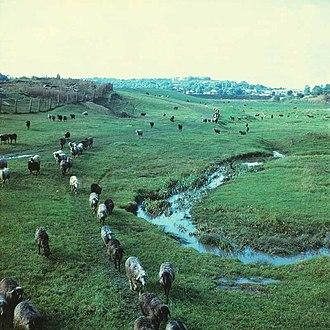 Pîrjota - Image: Home (1980). (22039455388)