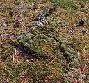 Hondsrug, De Strubben-Kniphorstbosch 001.jpg