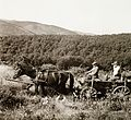 Horse, chariot, hunting Fortepan 92396.jpg